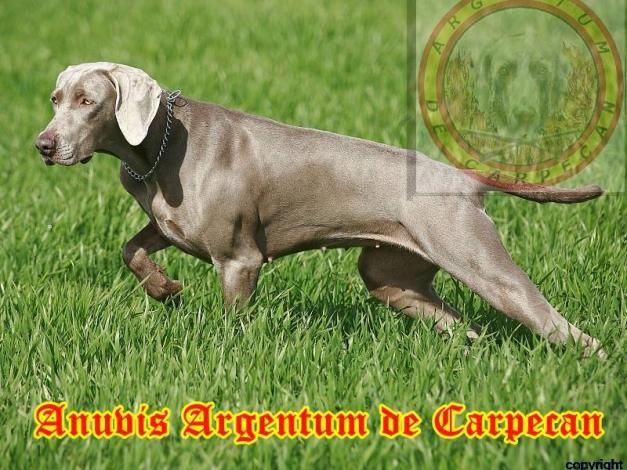 Anuvis Argentum de Carpecan de muestra en la P.A.N/T.A.N