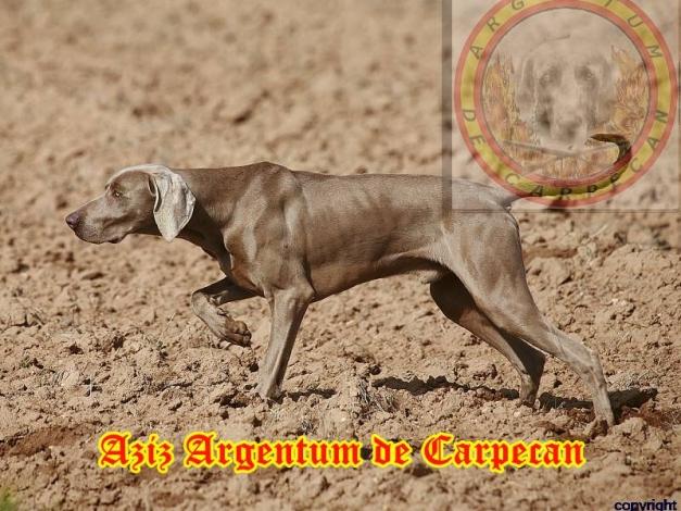 Aziz Argentum de Carpecan de muestra en la P.A.N/T.A.N