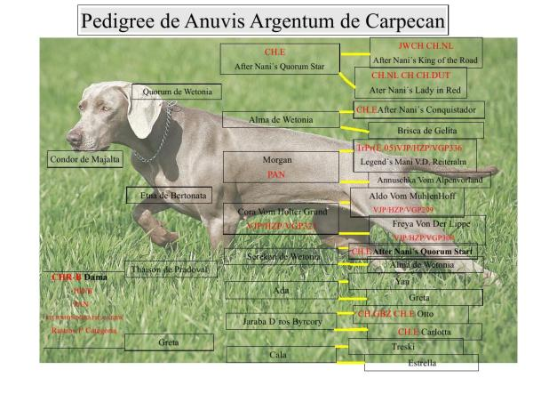 Pedigree de Anuvis